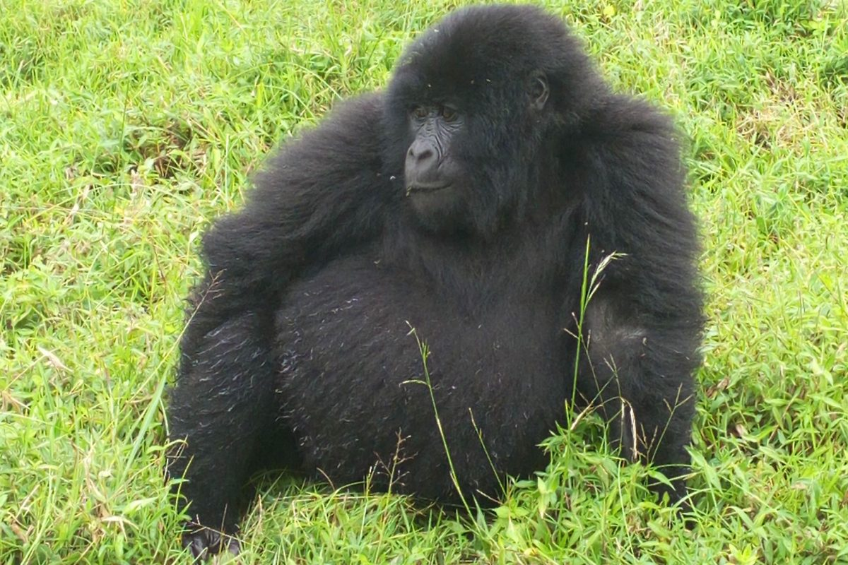 Wildlife and Gorilla Safaris in Uganda