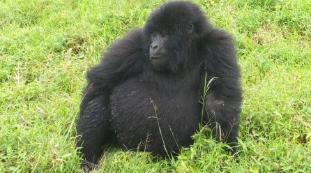Virunga Gorilla Safari and Wildlife Safari