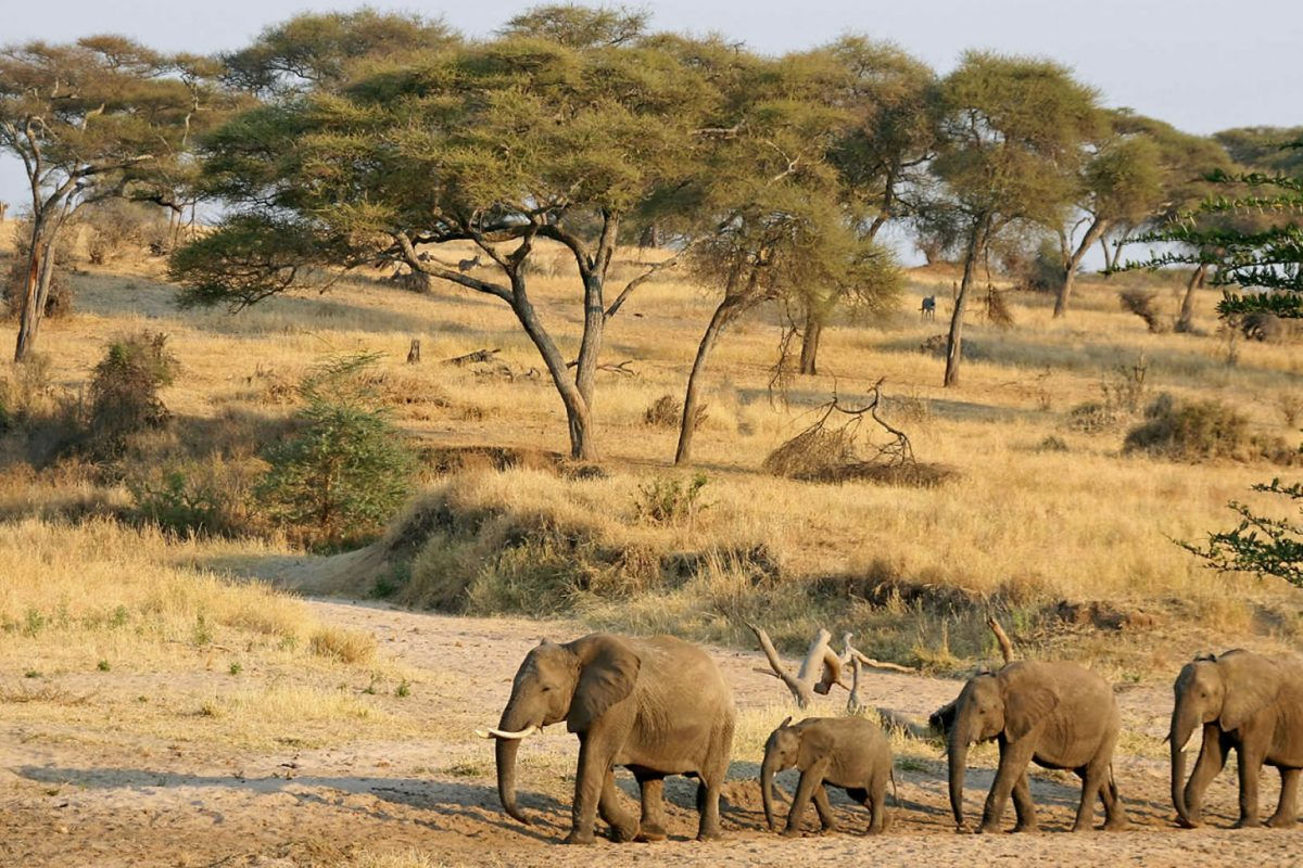 Where to Take the Best Wildlife Safaris in Uganda