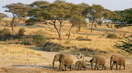 Go Kidepo Wildlife Safaris in Uganda