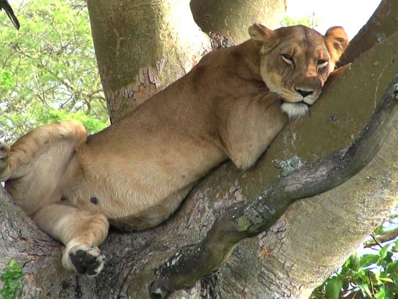 Uganda Safari Experience in Queen Elizabeth National Park