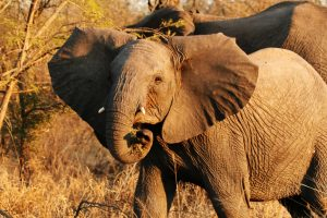 Visit Uganda Pure Wildlife National Parks–Kidepo and Murchison